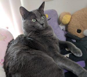 Molly Rabbitt's cat