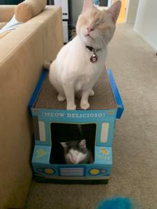 Katrina Leonoudakis Cats